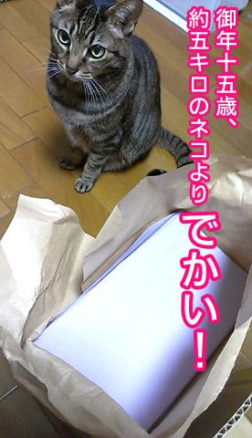 5キロのネコよりでかい!