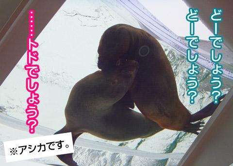 image_asika2